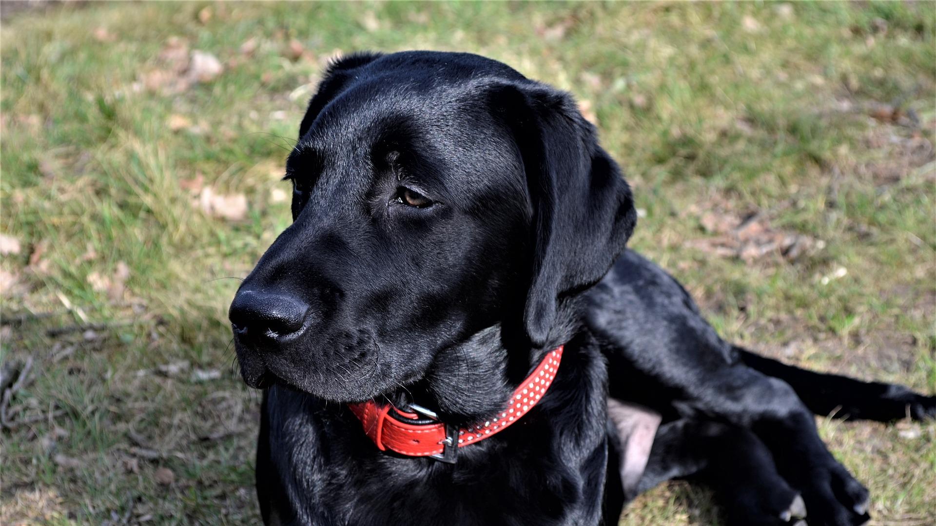 discrimination dog training