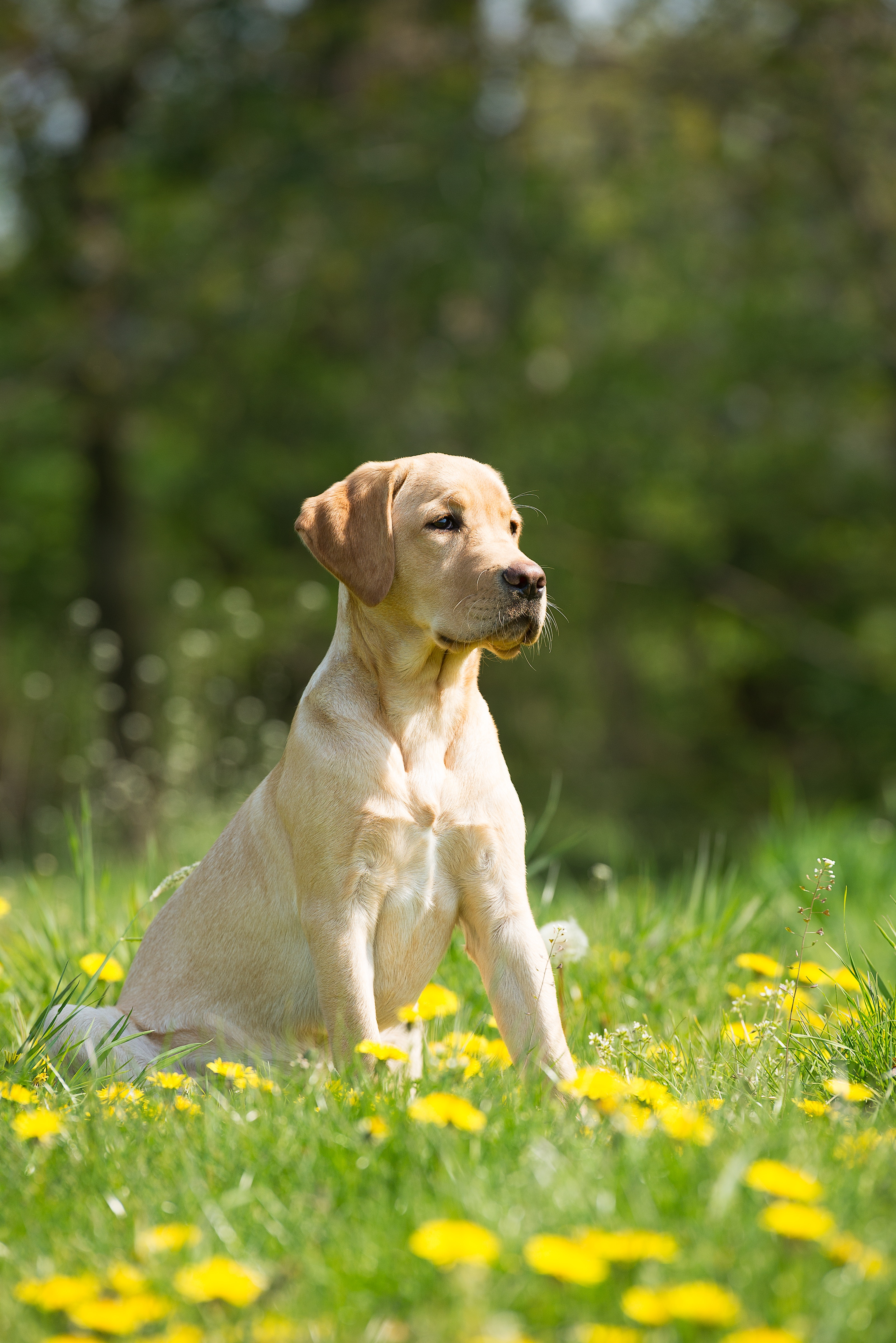 visual cues in dog training