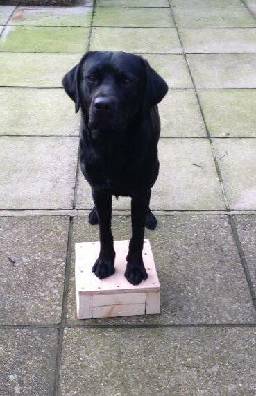 paws on dog training
